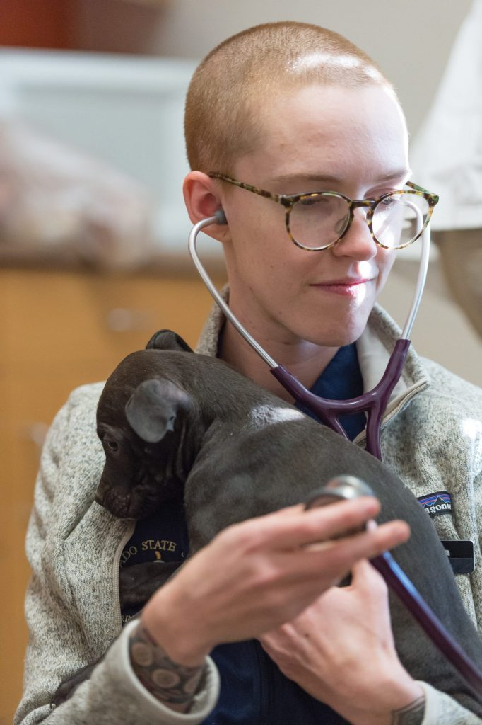 CSU vet student provides care for puppy