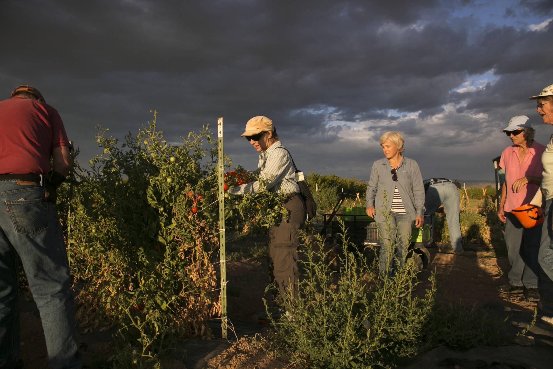 People harvesting food in field