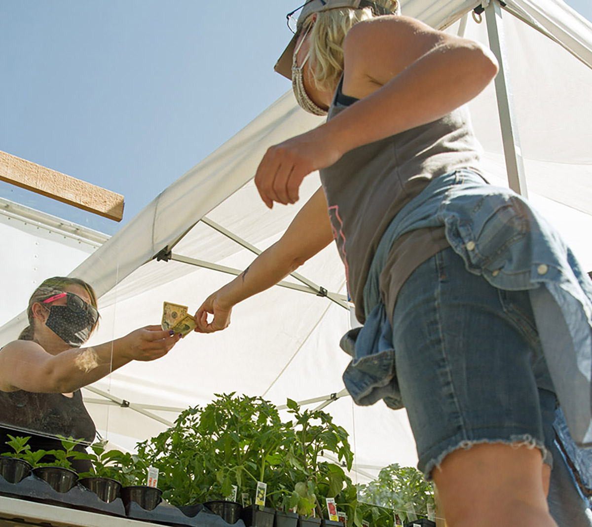 Photo of the Larimer County Farmers' Market, run by CSU Extension