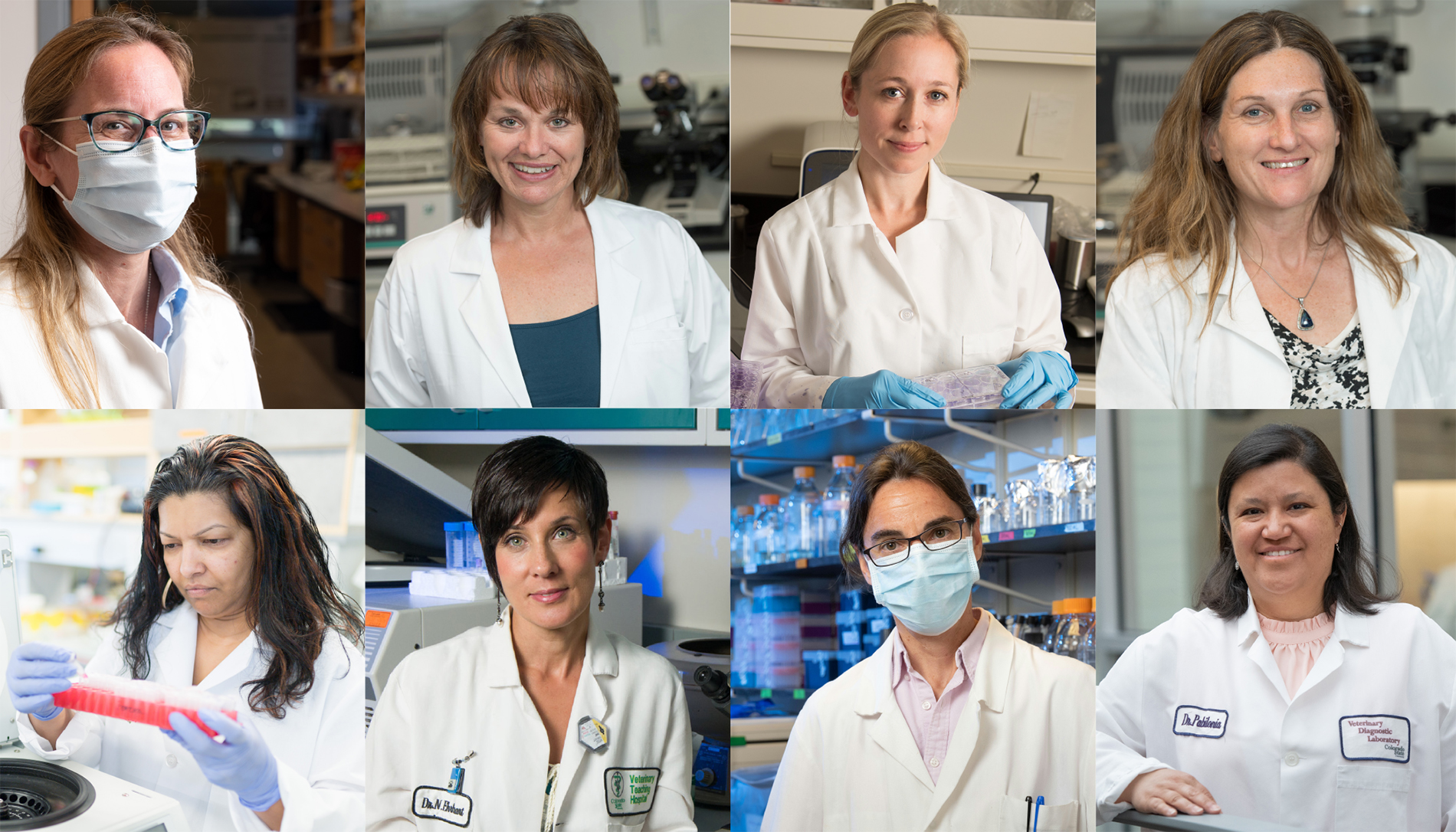 CSU researchers pursuing solutions to COVID-19 include, top row, Amy MacNeill, Candace Mathiason, Rebekah Kading, and Sue VandeWoude; bottom row, Rushika Perera, Nicole Ehrhart, Mary Jackson, and Kristy Pabilonia, among many others. Photos: Colorado State University